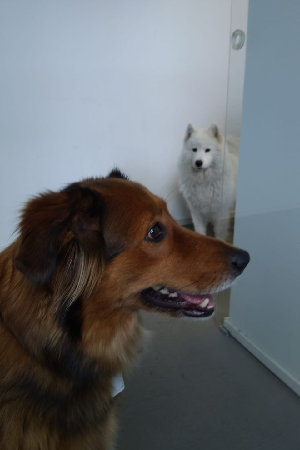 1.5x-dogs-halla-looking-jealously-at-romi